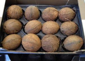 Kokosnüsse in Legenest aus PP